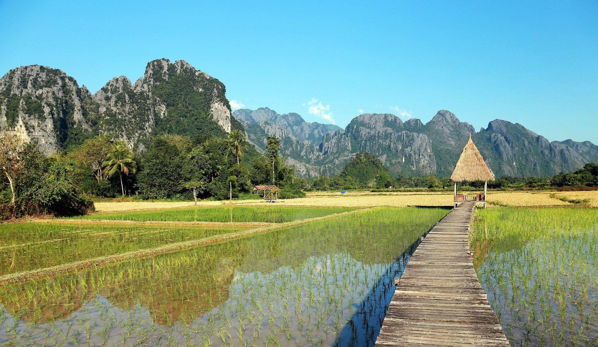 Rice fields in Vang Vieng, Laos