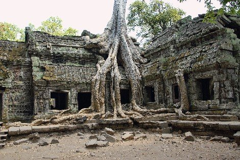 Ta Prohm Temple near Siem Reap
